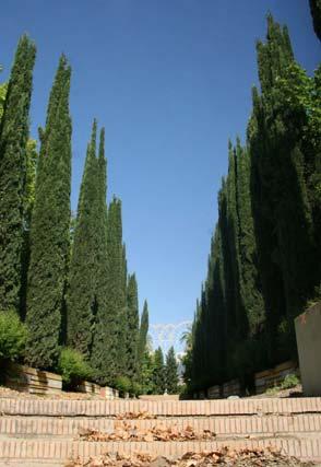 Laberinto de los cipreses, en los Jardines del Guadalquivir.  Foto: Belén Vargas
