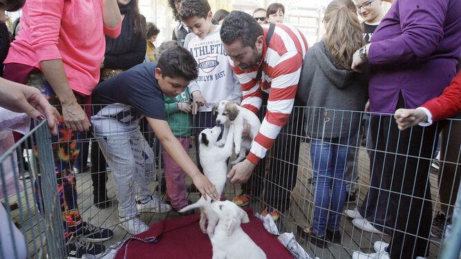 Exhibición de mascotas organizada por el CECA.
