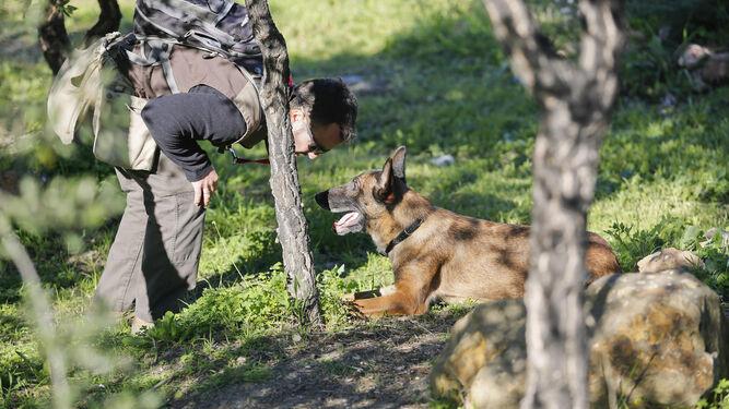 Un agente de medio ambiente detecta un cebo con ayuda de un perro especializado.