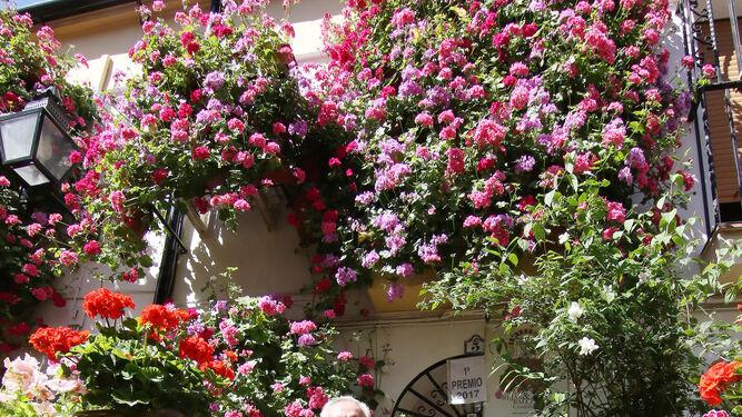 Muchisimo Mas Que Bellos Jardines Colgantes Repletos De Geranios Y