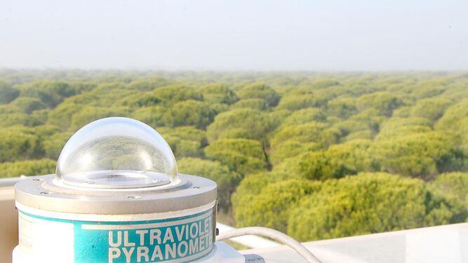 Investigadores de la UHU defienden la importancia del pino para recuperar Doñana
