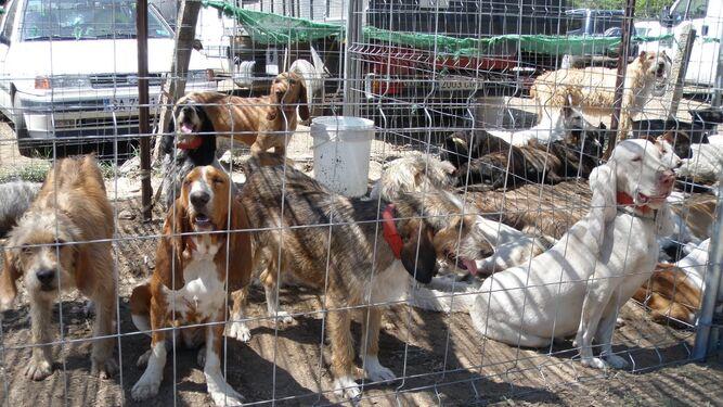 Imagen de archivo de varios perros de una rehala.