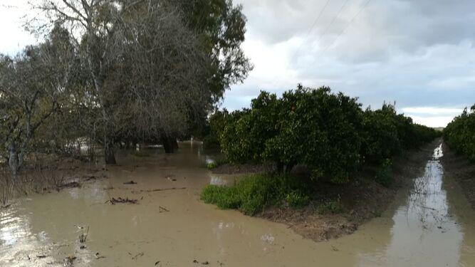 El río Genil desbordado en la zona de huertas Pedro Díaz, fuera del casco urbano.
