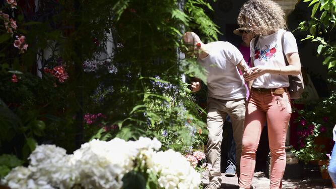 Una pareja observa unas plantas en el patio de Duque de la Victoria, 3.