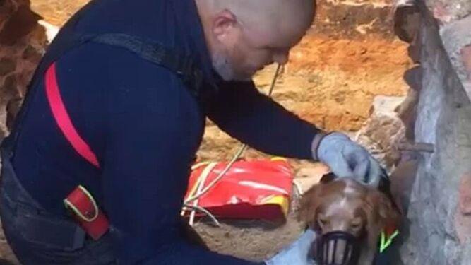 Descubren en Córdoba una mina abandonada donde se lanzaban perros de caza para que murieran